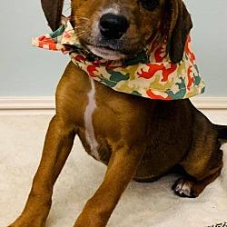 East Mississippi Animal Rescue in Meridian, Mississippi