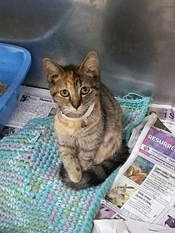 Adopt A Pet :: Sassy  - Mt Vernon, IN