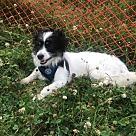 Adopt A Pet :: Bamz