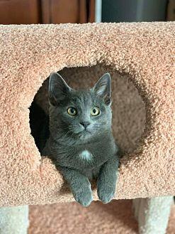 Adopt A Pet :: Jessie  - Troy, MI