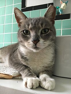 Adopt A Pet :: Blossom  - BROOKLYN, NY