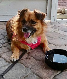 Adopt A Pet :: Cutie Pie  - Ft Myers Beach, FL