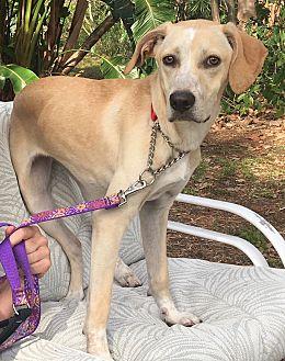 Adopt A Pet :: Loves to run!!!  - Ft Myers Beach, FL