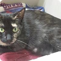 Adopt A Pet :: Taffy - Freeport, NY