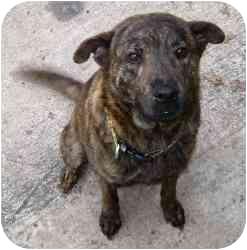 Minneapolis Mn Shar Pei Meet Roxi A Pet For Adoption