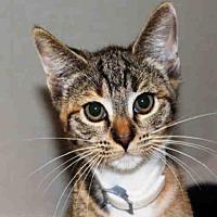 Adopt A Pet :: BABY - Hampton Bays, NY