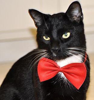 Adopt A Pet :: Joey  - Liberty, NC