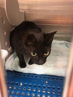 Adopt A Pet ::   - Havelock, NC