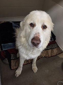 Adopt A Pet :: Sandy  - Moose Jaw, SK
