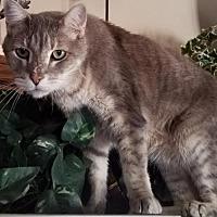 Adopt A Pet :: Franklin - Phoenix, AZ