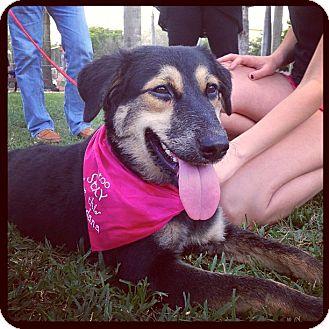 German Shepherd Dog/Collie Mix Dog for adoption in Miami, Florida - Lucy