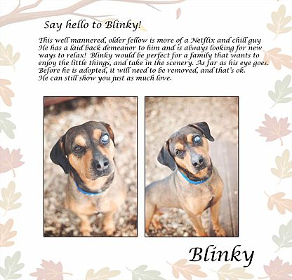Hobart, IN - Shepherd (Unknown Type)  Meet Blinky a Pet for Adoption
