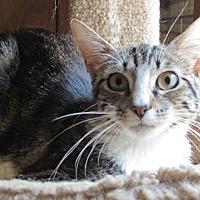 Adopt A Pet :: Kris - Wheaton, IL