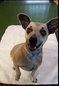 Adopt A Pet :: Blossom  - Northwood, NH