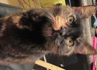 Adopt A Pet :: Peepo  - Floral City, FL