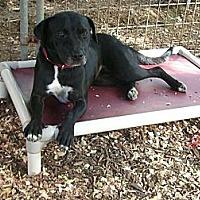 Adopt A Pet :: Sissy - Fair Oaks Ranch, TX
