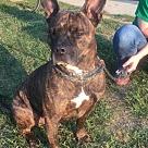 Adopt A Pet :: Jackson