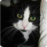 Adopt A Pet :: Icicle - Strathmore, AB
