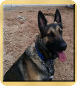 German Shepherd Dog Dog for adoption in Scottsdale, Arizona - Hank