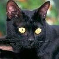 Adopt A Pet :: Billie - Sunny Isles Beach, FL