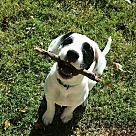 Adopt A Pet :: chance