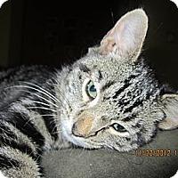 Adopt A Pet :: Shere Khan - Bunnell, FL