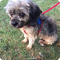 Adopt A Pet :: Coco - Madison, WI