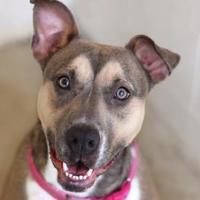 Adopt A Pet :: TOPANGA - Kyle, TX