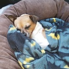Adopt A Pet :: Louie (COURTESY POST)
