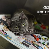 Adopt A Pet :: GIGI - Johnstown, PA