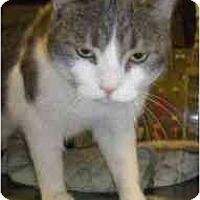 Adopt A Pet :: Mariah - Strathmore, AB