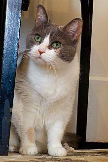 Adopt A Pet :: Strawberry  - Troy, MI