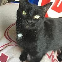 Adopt A Pet :: Priya - St. Louis, MO