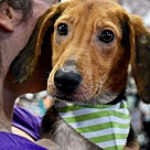 Adopt A Pet :: Charming