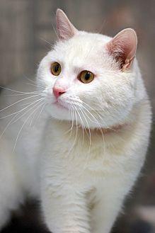 Adopt A Pet :: Salt  - Troy, MI