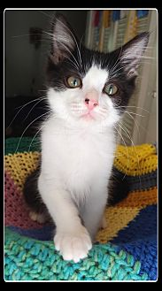 Pippin  *ADOPTED!