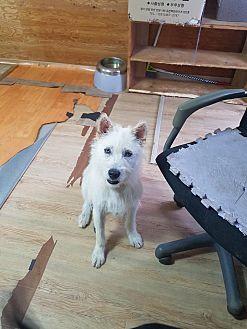 Adopt A Pet :: Sori  - Renton, WA