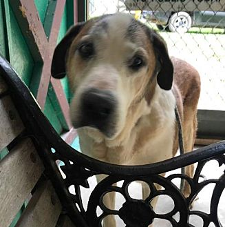 Adopt A Pet :: Nobody wants Dover?  - Charleston, WV