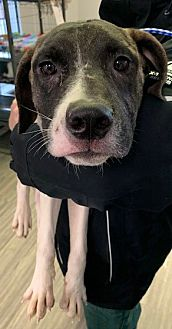 Adopt A Pet :: Charlie  - Moose Jaw, SK