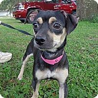 Adopt A Pet :: Hu-D-ni - Brooksville, FL