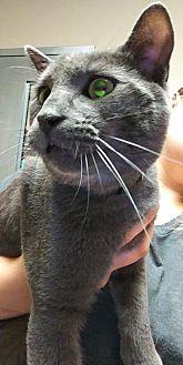 Adopt A Pet :: Crypt: Martin  - Edmonton, AB