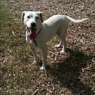 Adopt A Pet :: Blossum