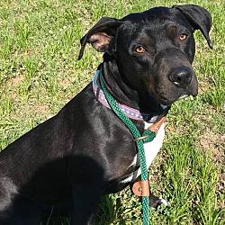 Puppies For Sale In Zanesville Ohio Adoptapet Com