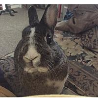 Adopt A Pet :: Caroline (COURTESY POST) - Baltimore, MD