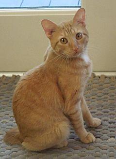 Adopt A Pet :: Charley  - Liberty, NC