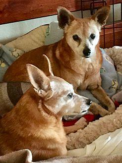 Adopt A Pet :: Kiki Genevieve n Sir Jumbo  - Corona, CA