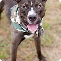 Adopt A Pet :: Hank - La Crosse, WI