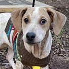 Adopt A Pet :: Tangie