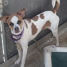 Adopt A Pet :: Rhonda