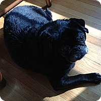 Adopt A Pet :: Georgie - Hinckley, MN